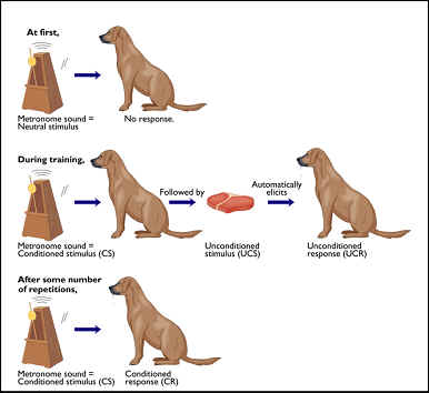 Experimental Conditions In Pavlov S Dogs